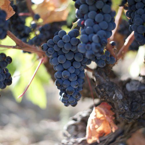 Bodegas de la Ruta del Vino de Arribes